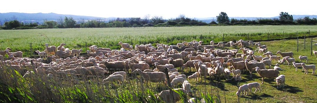 Cabecera por que consumir carne ecologica - Noticias Ecológicos Aranda