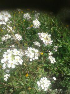 Flores en el Olivar 3 - Noticias Ecológicos Aranda