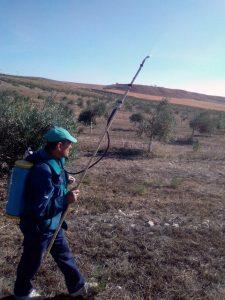 Foto 2 Preparación del olivar para la recogida - Noticias Ecológicos Aranda