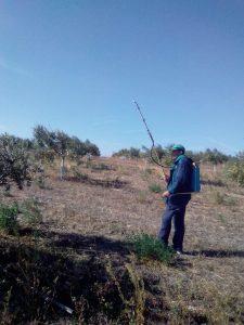Foto 6 Preparación del olivar para la recogida - Noticias Ecológicos Aranda