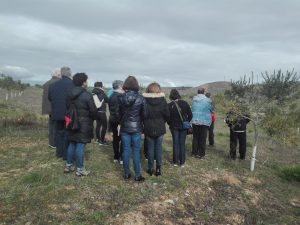 Foto 3 Mañana por el olivar ecológico - Noticias Ecológicos Aranda