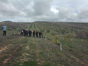 Foto 1 Mañana por el olivar ecológico - Noticias Ecológicos Aranda