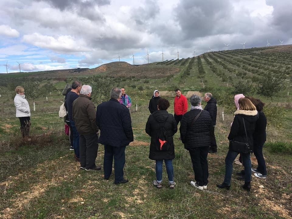 Cabecera mañana por el olivar ecológico - Noticias Ecológicos Aranda