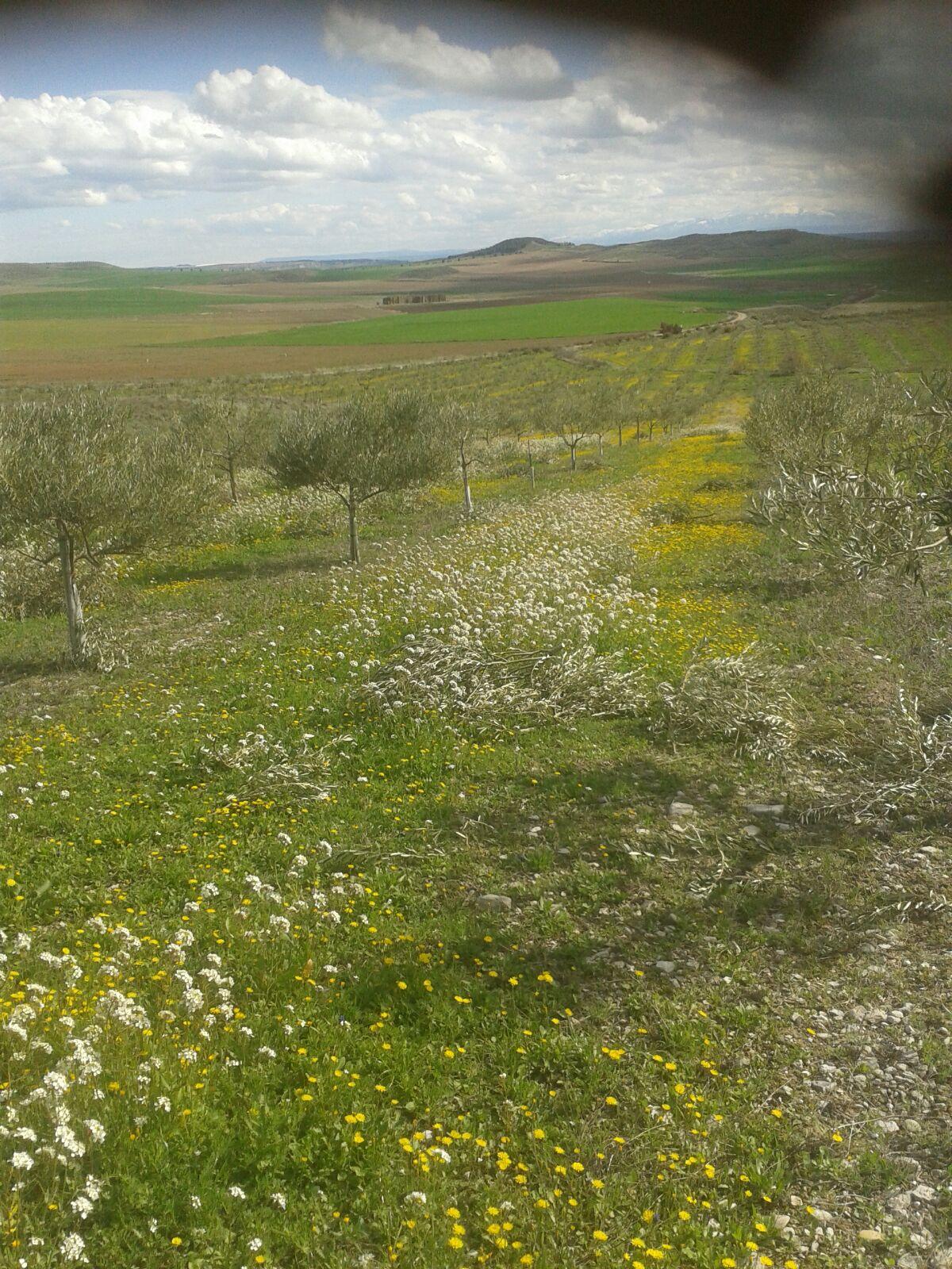 Cabecera Flores en el Olivar - Noticias Ecológicos Aranda