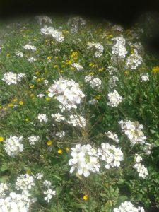 Flores en el Olivar 4 - Noticias Ecológicos Aranda