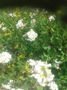 Flores en el Olivar 2 - Noticias Ecológicos Aranda