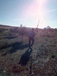 Foto 4 Preparación del olivar para la recogida - Noticias Ecológicos Aranda