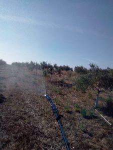 Foto 5 Preparación del olivar para la recogida - Noticias Ecológicos Aranda