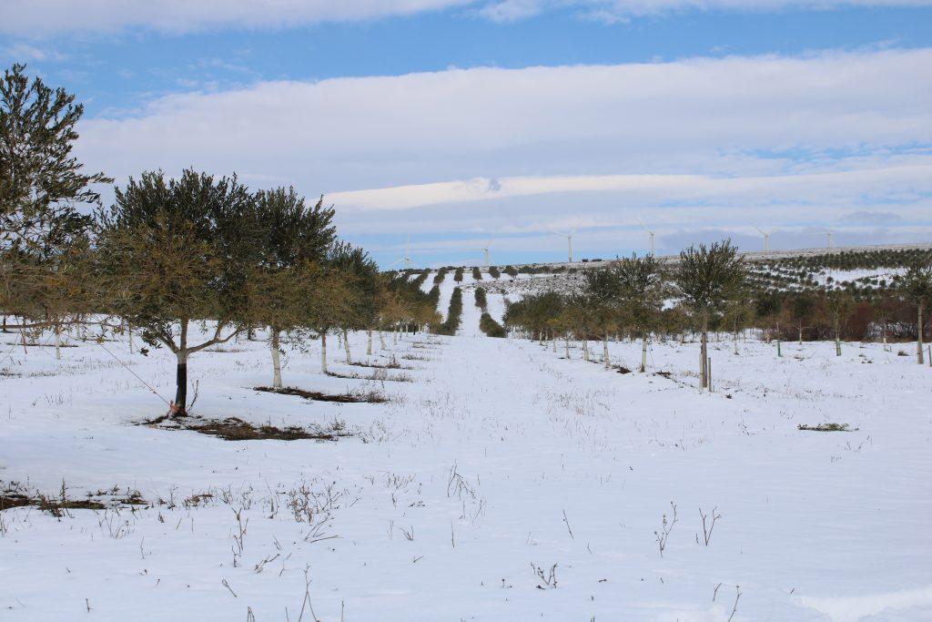 Foto 3 Cuando la tierra se viste de blanco - Noticias Ecológicos Aranda