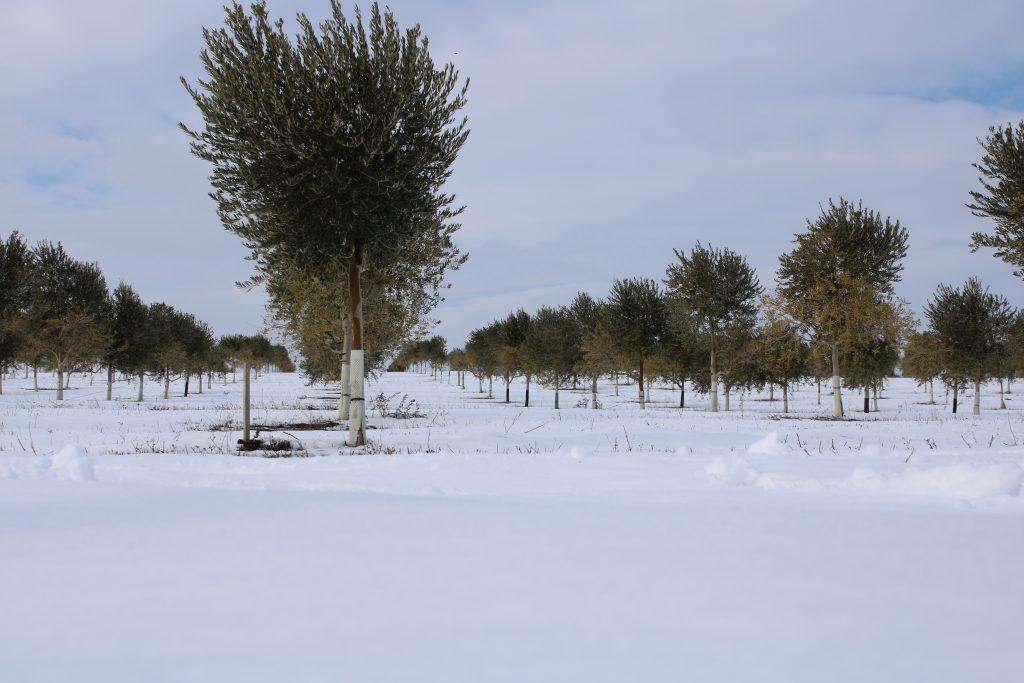 Foto 2 Cuando la tierra se viste de blanco - Noticias Ecológicos Aranda