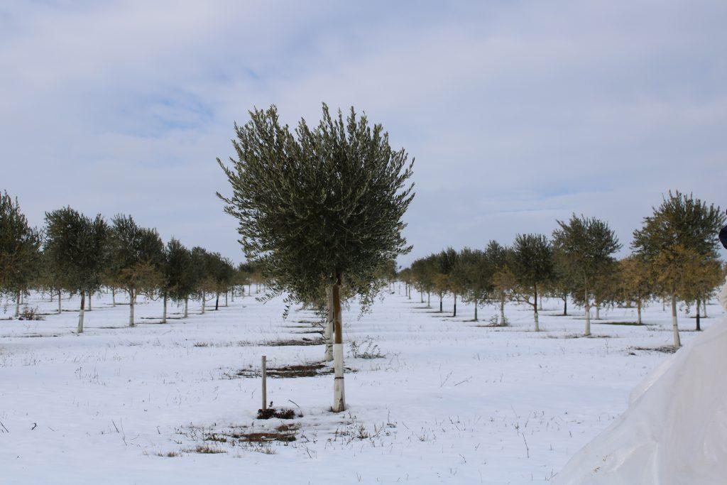 Foto 1 Cuando la tierra se viste de blanco - Noticias Ecológicos Aranda