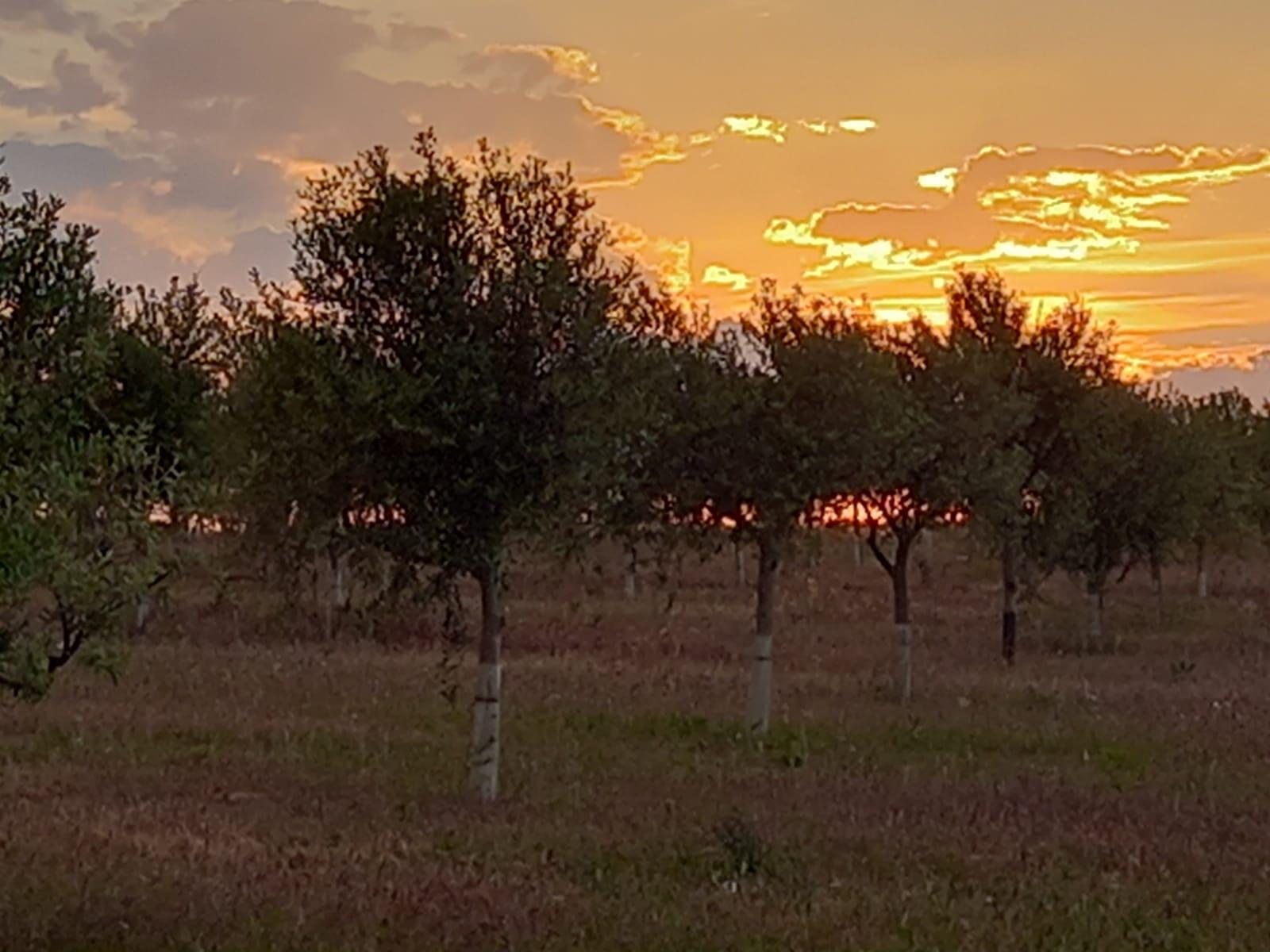 Cabecera Creando Pantanos en nuestro olivar - Noticias Ecológicos Aranda